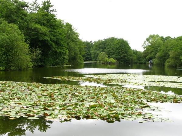 Bestwood No1 Pond_600