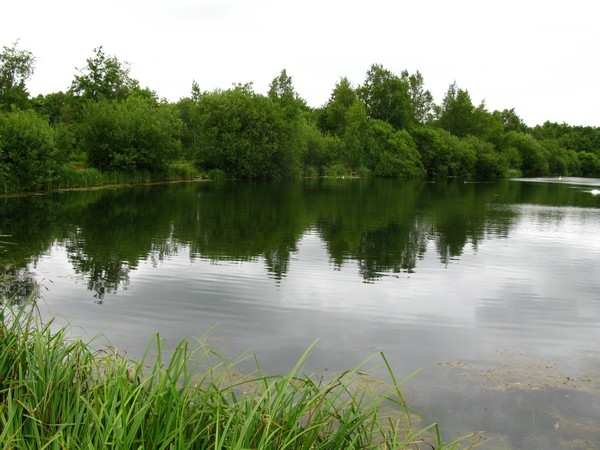 Bestwood No5 Pond_600